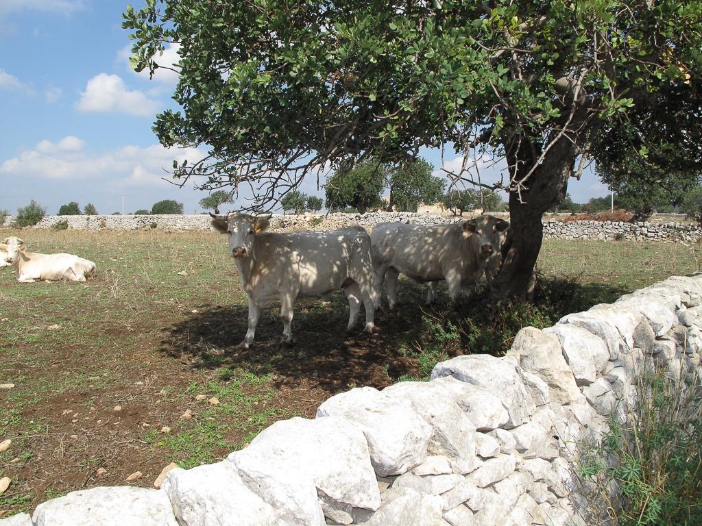 Sicily_327.jpg