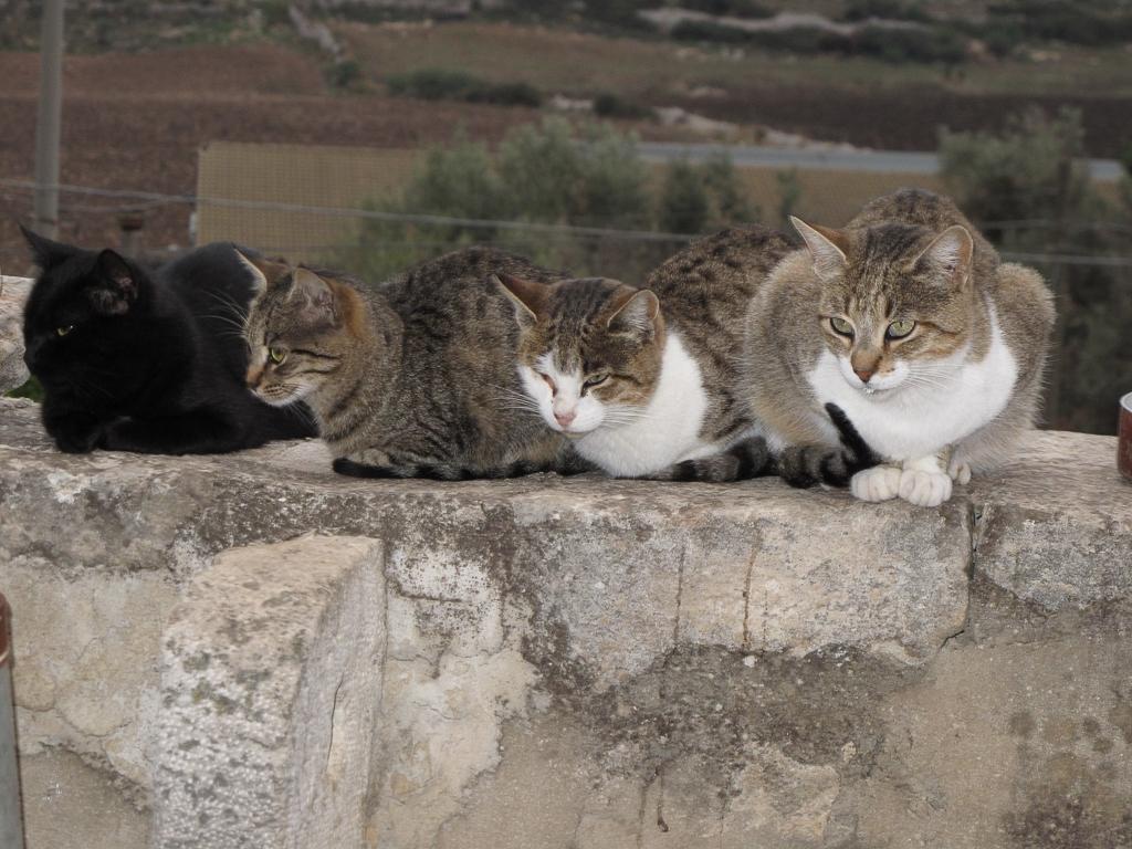 Sicily_397.jpg